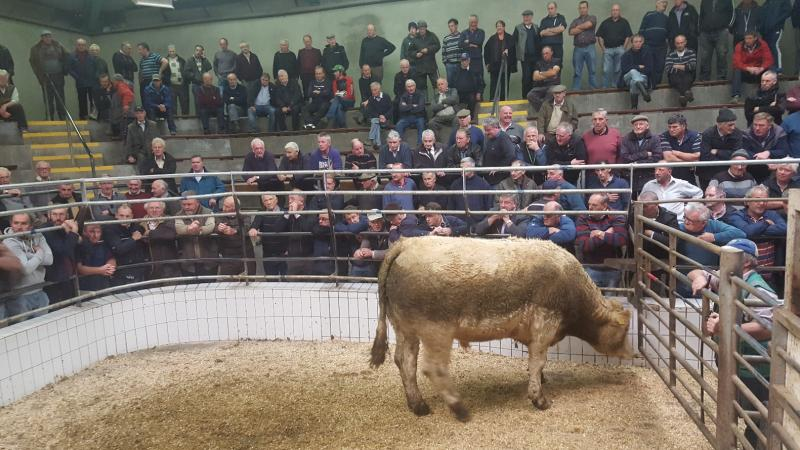 Busy Mart at Ennis on Thursday