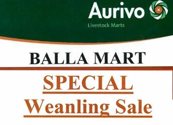 Balla Special Weanling Sale