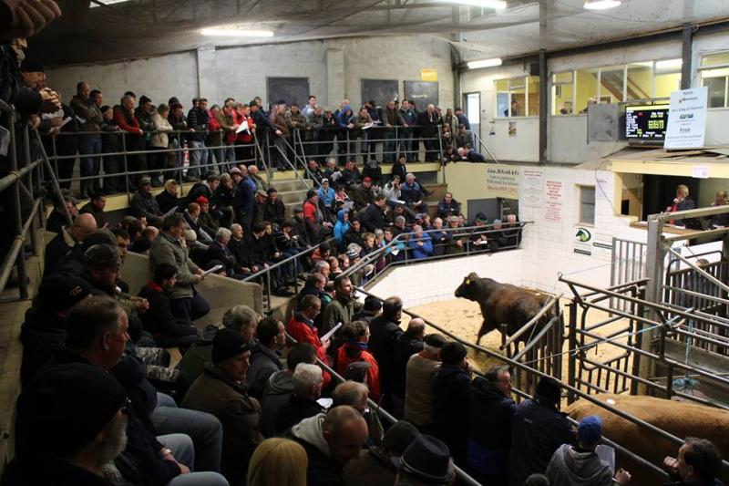 Tullamore Mart - Replacement Heifer Suckler Sale 07/05/18