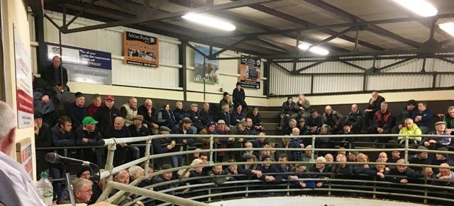 470 Cattle  at  Ballinrobe Mart on Wednesday