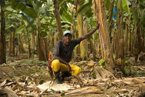 FYFFES COMMITMENT TO FAIRTRADE RECOGNISED