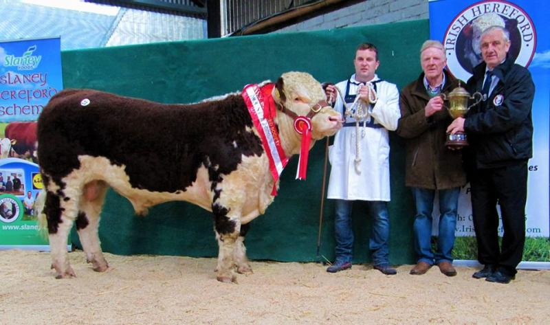 Premier Autumn Show & Sale of Pedigree Bulls and Heifers this Saturday at Tullamore Mart