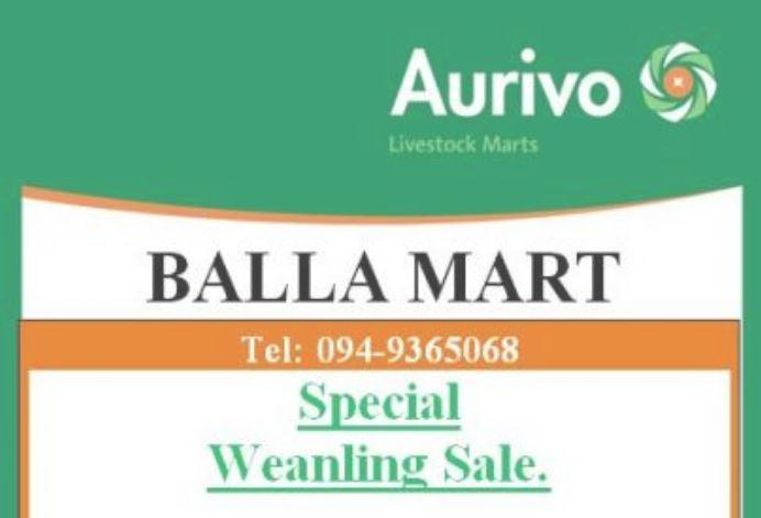 Balla Weanling Sale 2nd of February.