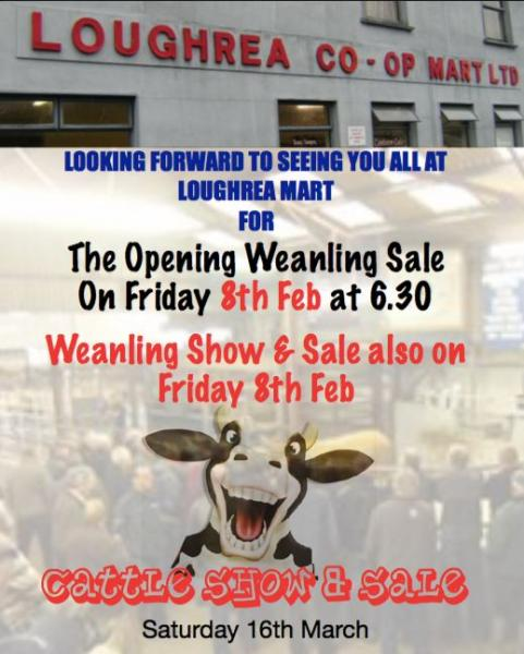 Loughrea Opening Weanling Sale