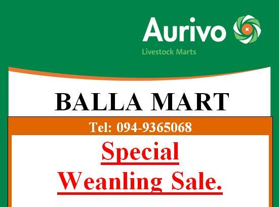 Balla Mart Special Weanling Sale, 2nd of March.