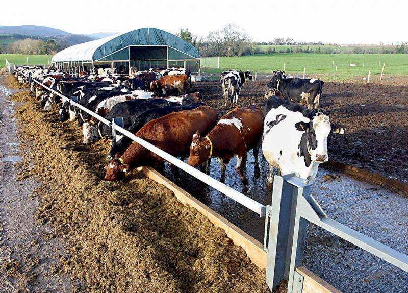 Practical On Farm Herd Solution Herd to Supplement Trace Elements
